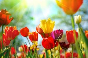 Farbige Blumen für bessere Frühjahrsstimmung